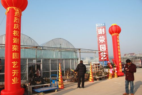河南苗木公司开业点礼图片