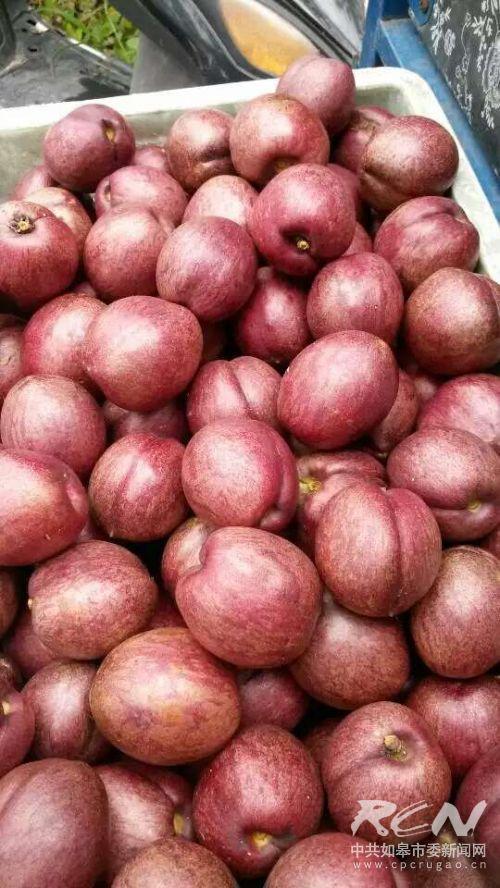 采摘的油紫桃