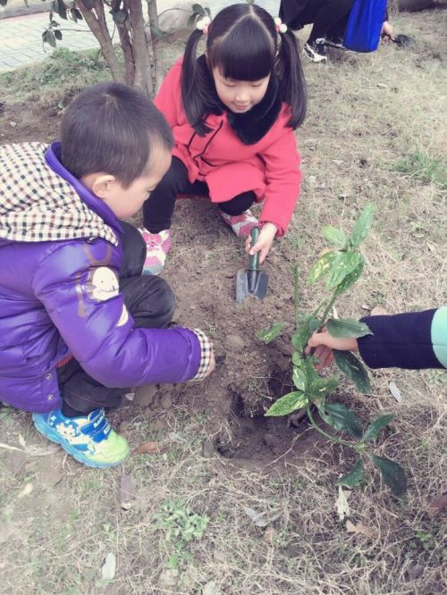 健康幼儿园开展植树节系列主题活动