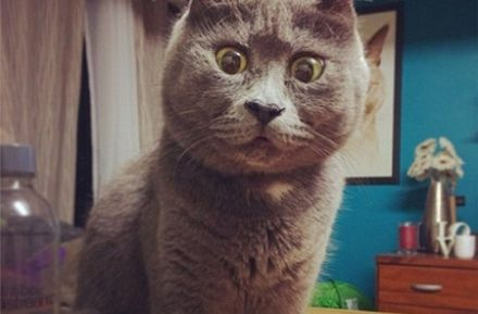 """小猫患脑积水反成网红:""""吃惊""""表情别具一格一角"""