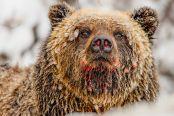 近距离拍摄熊的日常生活:和平温柔且聪明