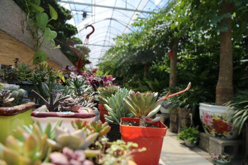 中国·如皋国际园艺城:从花木交易市场到商业综合体的