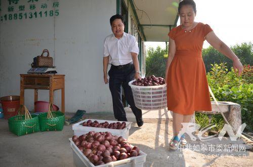 10 游客喜摘大紫桃