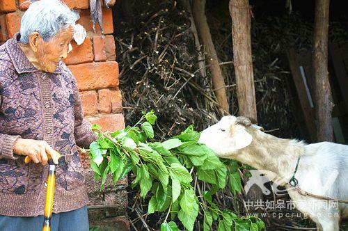 9、(白蒲镇陈和英 102岁) 我和我的宠物羊!