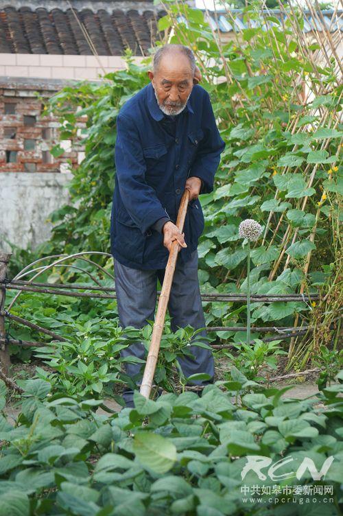 18、(白蒲镇王金泉 102岁) 一生勤劳惯了,空下来不做事反而不自在。现在锄个草那是小菜一碟!