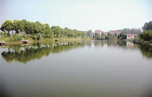 河清岸绿村庄美
