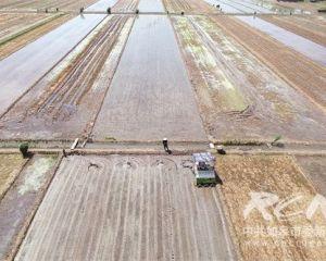 全市水稻栽插即将结束95%田块实现机插秧