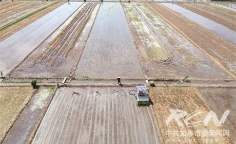 全市水稻栽插即将结束 95%田块实现机插秧