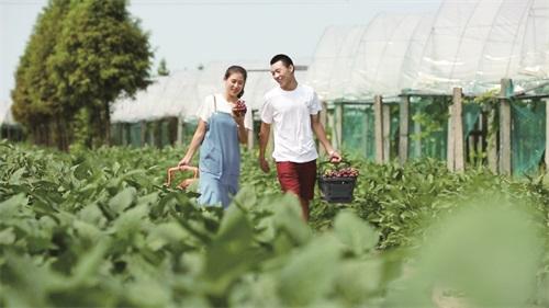 融入创意元素 推动休闲农业转型升级