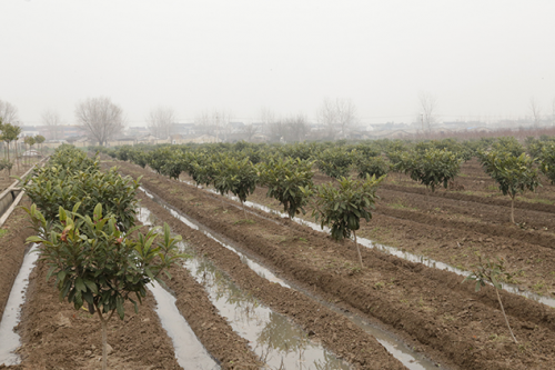 在黄桥革命老区的如皋,靖江,泰兴三县交界的江安镇双富家庭生态农场