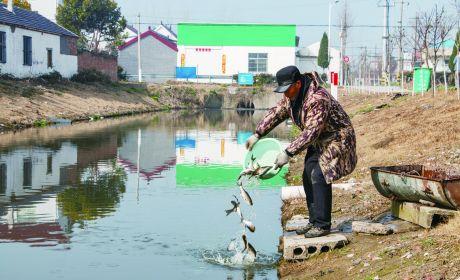 """东陈镇""""以鱼护河""""提升水域环境"""