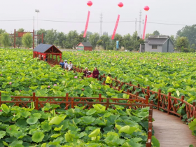 """""""这'皋'地,'如'你所愿""""庆祝新中国成立70周年主题网络文化活动"""