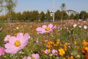 这个秋季一早起,一起来如皋赏花吧!