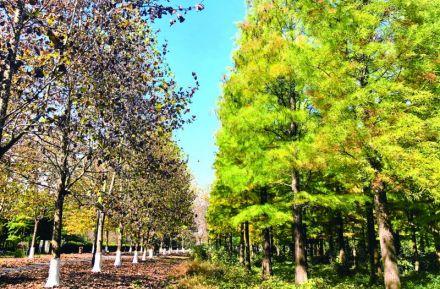 落叶遍地黄 美景惹人迷一角
