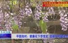 平园池村:紫藤花下学党史 美丽乡村建设忙