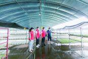 城南街道育华村:小豌豆做成大产业