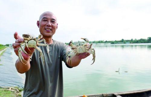 螃蟹爬出致富路 土地流转奔小康
